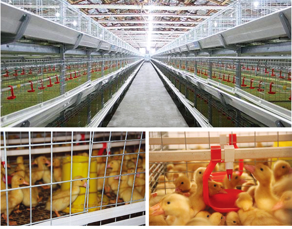 Various Advantages of Chicken Cage Automation Equipment