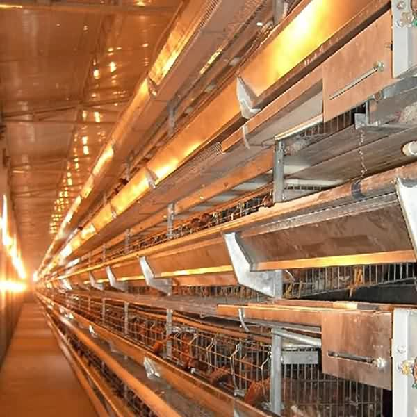 8 Year Exporter 2.15m Poultry Equipment - H Type Layer Cage – Hengyi