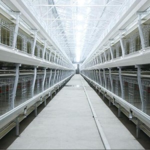 Biasa Broiler Chicken Cage
