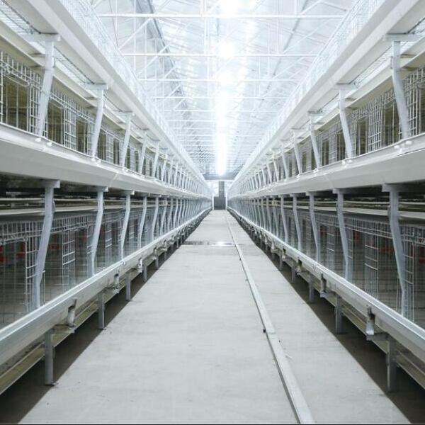 Ordinary Broiler Chicken Cage Featured Image