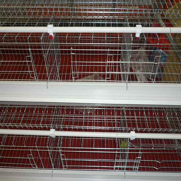 Hot Sale for Iso Certificate Chicken Layer Cage - A Type Breeder Cage – Hengyi